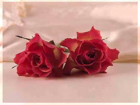 Valentinsgrüße